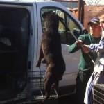 Romania: cani maltrattati e uccisi per conto del Governo, video shock