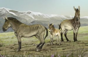 Trovata l'identità del 'cavallo dalle lunghe zampe' del Nord America
