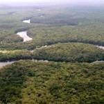 Congo: una dichiarazione per fermare il commercio illegale di legname