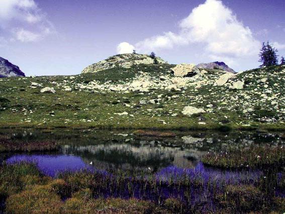 Area sommitale 1, piano subalpino superiore (Parco Regionale Mont Avic).