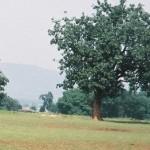 Semi di albero: nuovi biocarburanti sostenibili