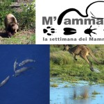 M'ammalia: una settimana per sensibilizzare al valore dei mammiferi nei nostri ecosistemi