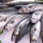 Sgombro e sardine utili contro l'ictus