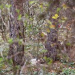 Parco d'Abruzzo: avvelenamenti dovuti a ignoranza e delinquenza, l'Ente in prima linea per combatterli