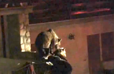 Orsa Gemma sul Balcone