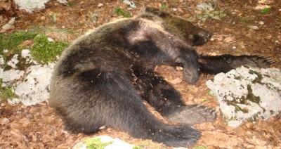 Orso morto molise