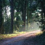 Le competenze nella gestione dei parchi e dell'ambiente