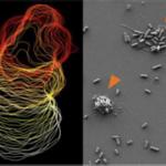 Sistema immunitario: gli spazzini del corpo