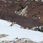 Capodanno nel Parco Nazionale d'Abruzzo alla scoperta della fauna selvatica