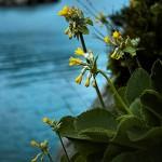 Il messaggio dei fiori
