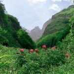 Far West al Parco della Majella: Legambiente denuncia comportamento del presidente Iezzi