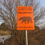 Salviamo l'Orso e sicurezza stradale: esecutivo il progetto finanziato da PATAGONIA