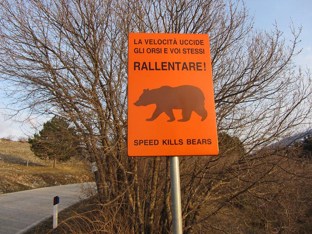 orso marsicano e sicurezza stradale