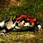 Tante (g)rane in Madagascar: il sostegno italiano alla biodiversità dell'isola