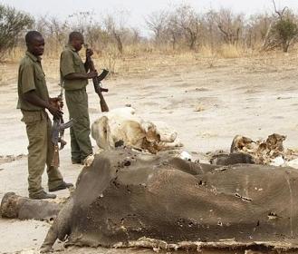 Zimbaue elefanti