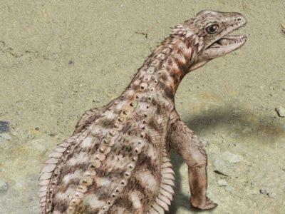 So-sah-das-Tier-von-241-Millionen-Jahren-aus-Die-Rekonstruktion-des-Buendner-Sauriers