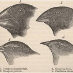 L'evoluzione a lungo termine? È possibile e anche prevedibile