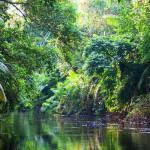Ecuador: pressione petrolio allo Yasuni National Park