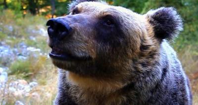 L'orsa Yoga  nell'area faunistica di Villavallelonga