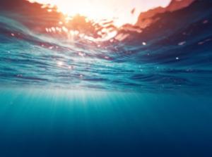 I cambiamenti climatici alterano l'istinto di sopravvivenza dei pesci