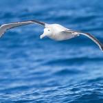Gli albatros siamo noi: il reportage di Chris Jordan