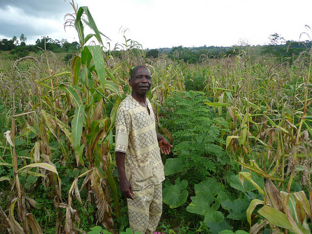 Il Programma &quot;Agroforestry Food Security Programme&quot; in Malawi (supportato da aiuti dall&#039;Irlanda). Foto di Charlie Pye-Smith