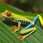 La funzione delle specie nei propri habitat, scienziati rivedono la teoria