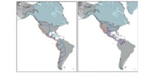Accadde in America: prima separate e poi ricongiunte le due antiche popolazioni