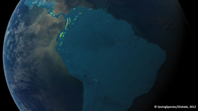 Anfibi - SavingSpecies