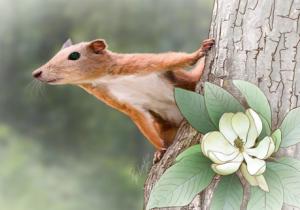 Caviglie fossili provano che gli antichi primati vivevano sugli alberi
