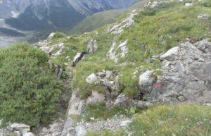 'Gigli di mare' fossili affiorano dalle rocce sulle Alpi austriache