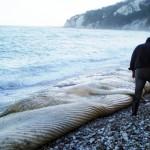 M'ammalia: Dino Scaravelli racconta i cetacei in Italia