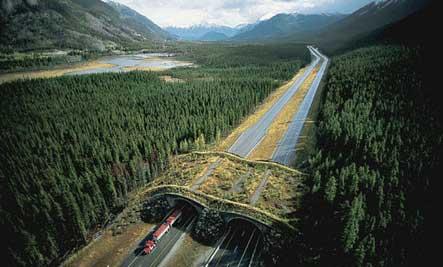 banff-canada-wildlife-overpass