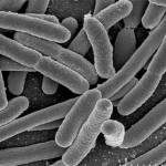 Creata la bio-benzina dall'Escherichia Coli