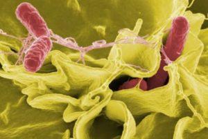 Scoperta l'antica presenza in Europa del batterio Salmonella Paratyphi C