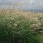 Biocarburanti: agricoltura e clima a rischio? Il passo indietro di Bruxelles