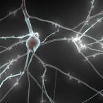 Blue Brain Project, la grande impresa di Joe Graham per capire il nostro cervello