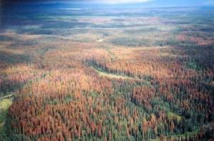 Con l'aumento delle temperature, il suolo della Terra 'respira' sempre peggio