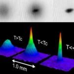 Il condensato di Bose-Einstein in un polimero luminescente