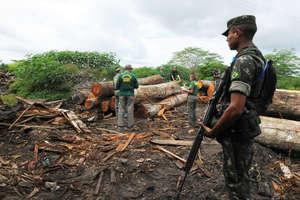 Un'operazione di terra condotta nel giugno scorso contro la deforestazione attorno al territorio degli Awá, non è riuscita a rimuovere i taglialegna operanti all'interno. © Exército Brasileiro