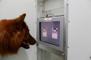 I cani distinguono le espressioni dei nostri volti