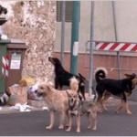 Allevamento dell'orrore a Bologna. Cani tenuti ammucchiati in piccole gabbie