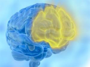 Segnali, scelte e conflitti: il cervello li sbroglia con attenzione