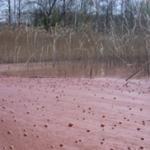 Uniformità di cianobatteri nei laghi: altra conseguenza del riscaldamento globale