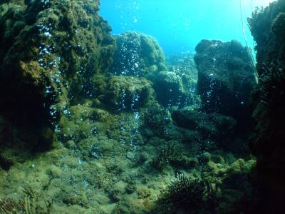 Effetto della CO2 sulle barriere coralline osservato per la prima volta. Crediti foto: Katharina Fabricius/Australian Institute of Marine Science