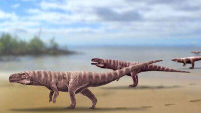 Rappresentazione di fantasia dei coccodrilli che hanno lasciato le loro tracce nella Corea del Sud (crediti: prof. Antonio Romillo)