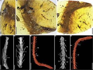 Scoperte coda e piume di dinosauro di 99 milioni di anni imprigionate nell'ambra