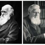 M'ammalia: dietro le quinte dell'evoluzione con Alfred R. Wallace