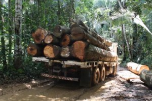 Foto scattata dai recercatori in Rondonia, Brasile.  Crediti: Jorge Rodrigues