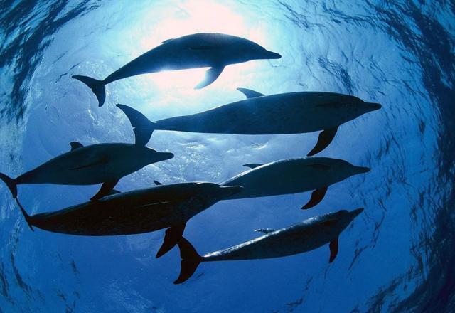 delfini-branco